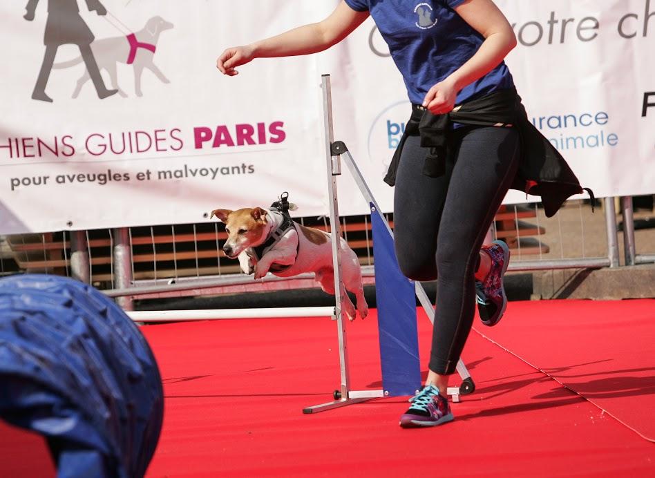 Wamiz Run organise sa deuxième édition de course solidaire. un évènement pet friendly à ne pas manquer. Entre activités sportives avec le cani cross / la cani marche et les animations et ateliers dog friendly.