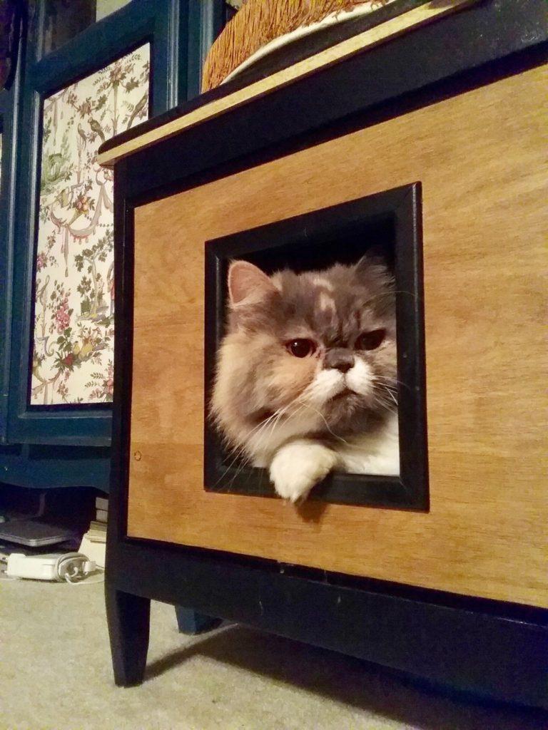 aménagement sur mesure et mobilier pour chat avec Gégène the cat - portrait d un couple parisien cat sitter au service des chats - mon avis sur les souribambelles