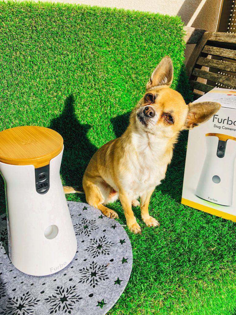 Découvrez mon avis complet sur la caméra connectée Furbo. Retrouvez mes conseils d'expert canin. La vérité et ce que vous ignorez sur la Furbo dans cet article