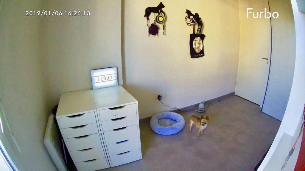 Comment surveiller son chien avec la caméra connectée Furbo? Découvrez mon analyse de spécialiste sur la caméra de surveillance Furbo. En bonus mes conseils d'expert pour la Furbo