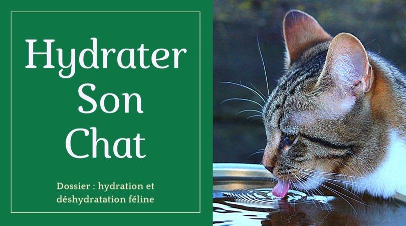 Retrouvez dans ce dossier d'hydratation et de déshydratation féline, les conseils et astuces de notre experte animalière pour hydrater correctement son chat même pendant la canicule