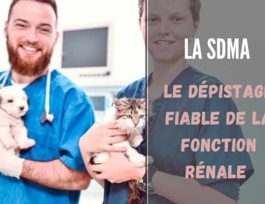tout sur le dépistage fiable de la fonction rénale : la sdma du chat et du chien