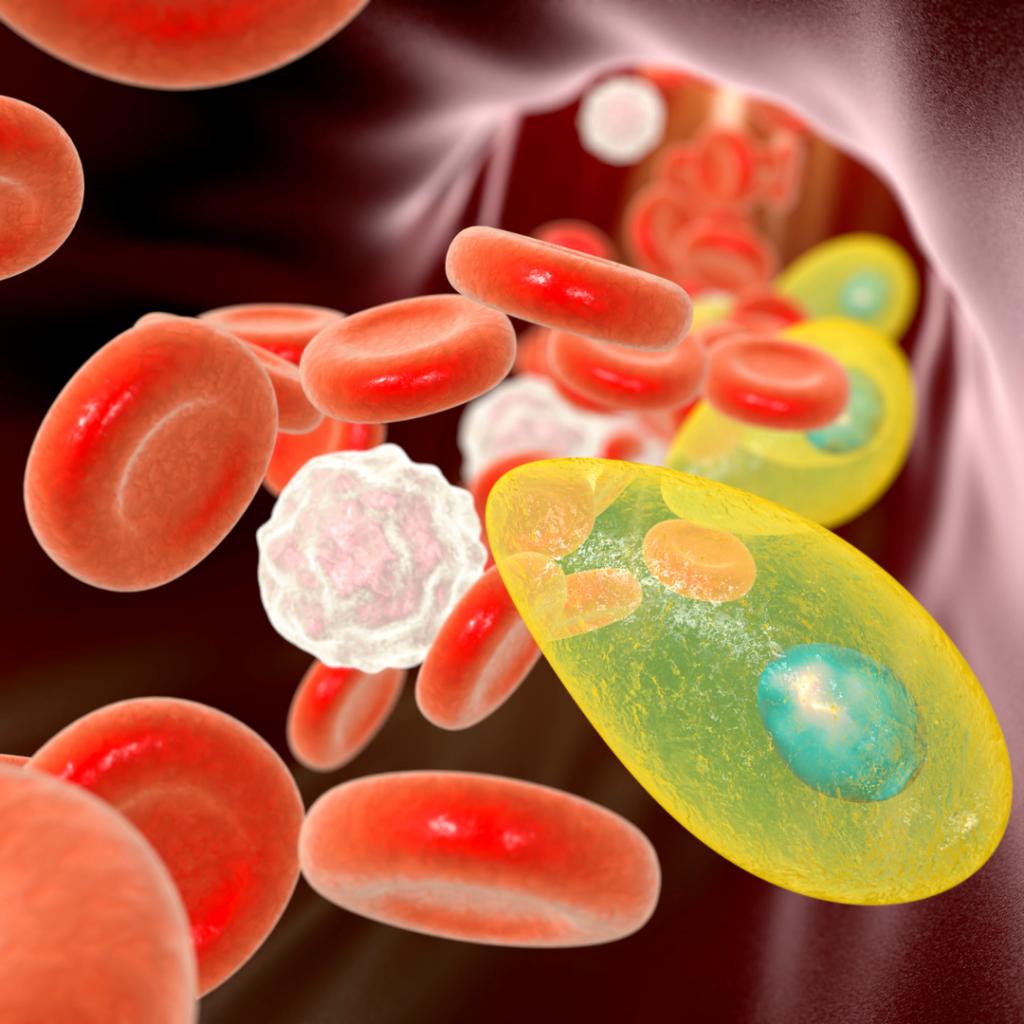 la toxoplasmose le risque chez la femme enceinte et les précautions à avoir